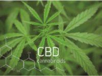 cannabisq1